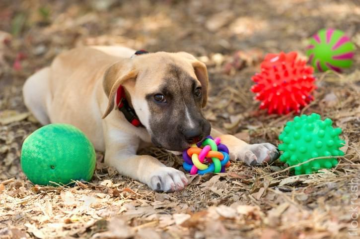 large durable dog toys