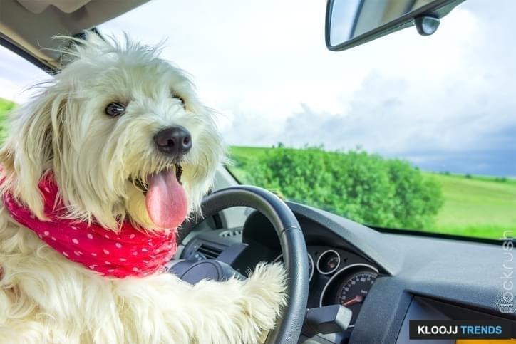Hot Cars Kills Dogs Save A Life