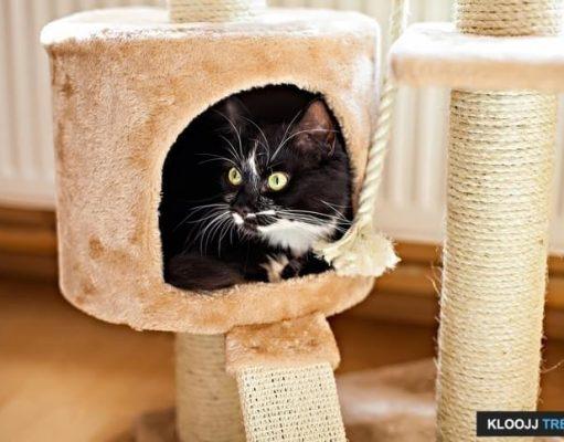 cat wall playground