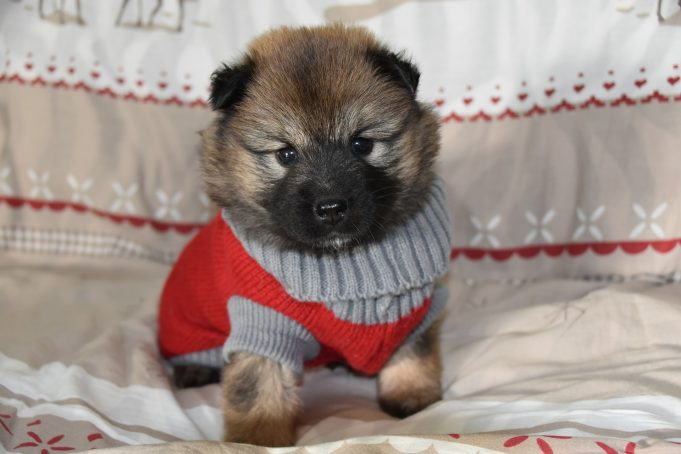 Do dogs like wearing clothes?