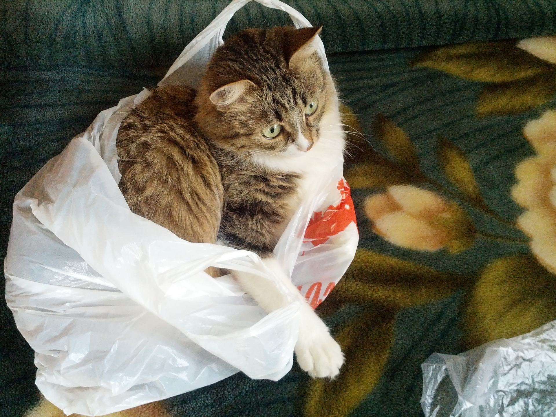 why do cats like to lay on plastic bags