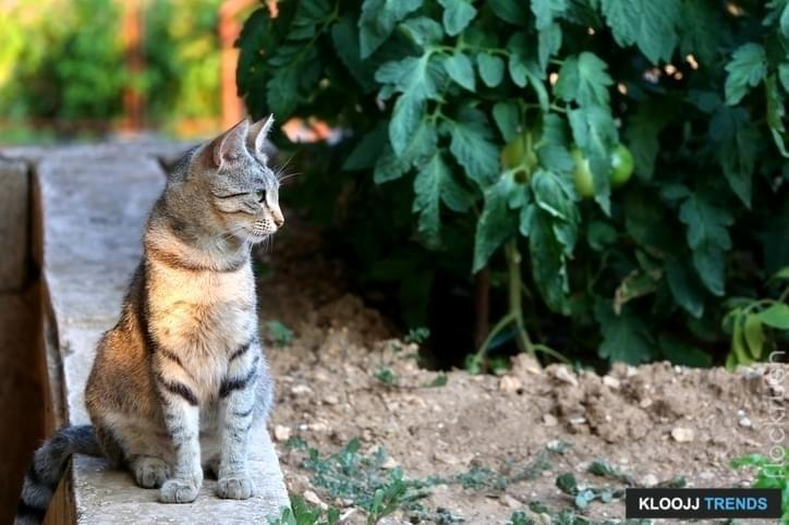 keep cats out of plants