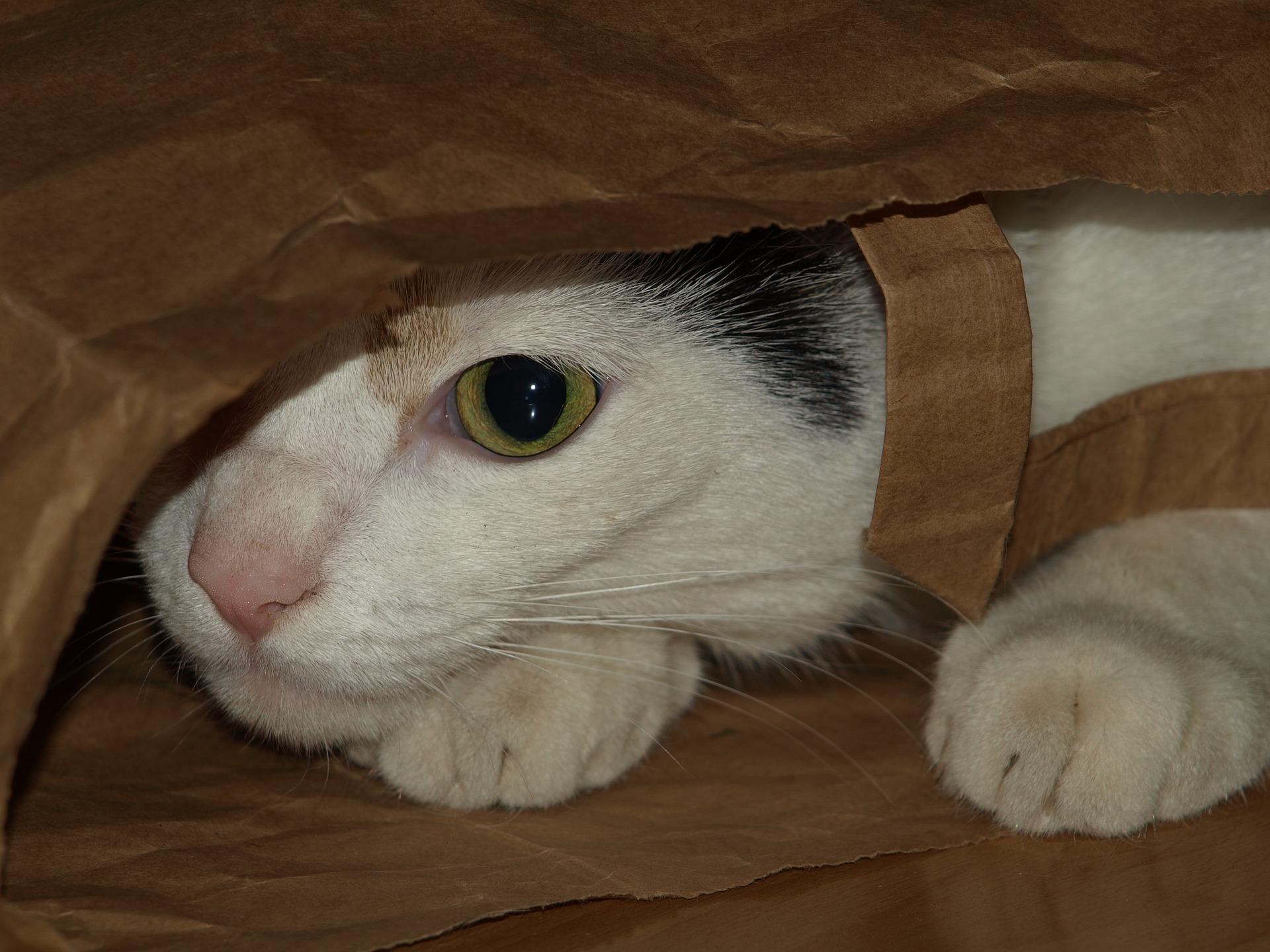 cat eats plastic