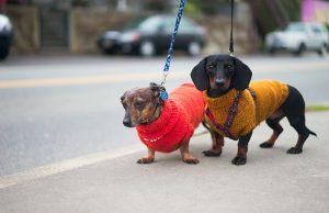 cute puppy sweaters